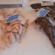 Fisch in den Niederlanden kaufen
