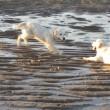 Hunde am Strand der Nordsee