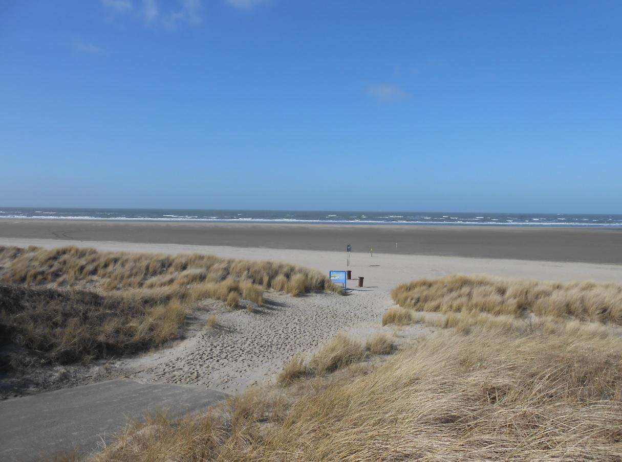 Natur und Sandstrand in den Niederlanden